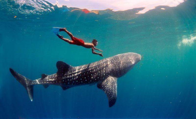 Lặn biển cùng cá mập