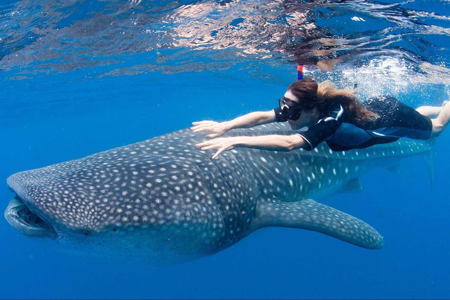 Lặn biển ngắm cá mập ở Philippines